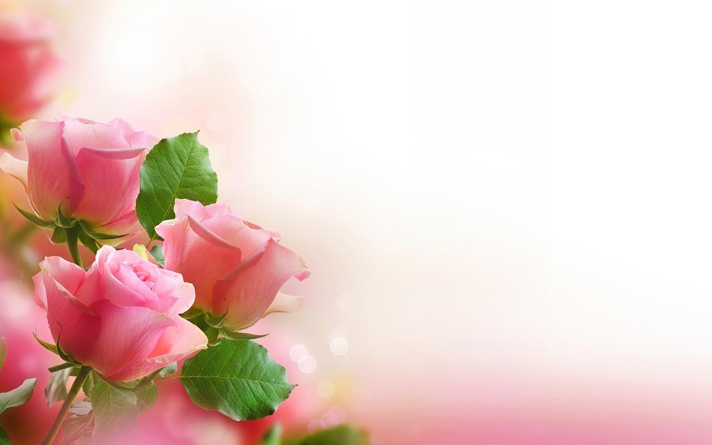 Красивые цветы и поздравления