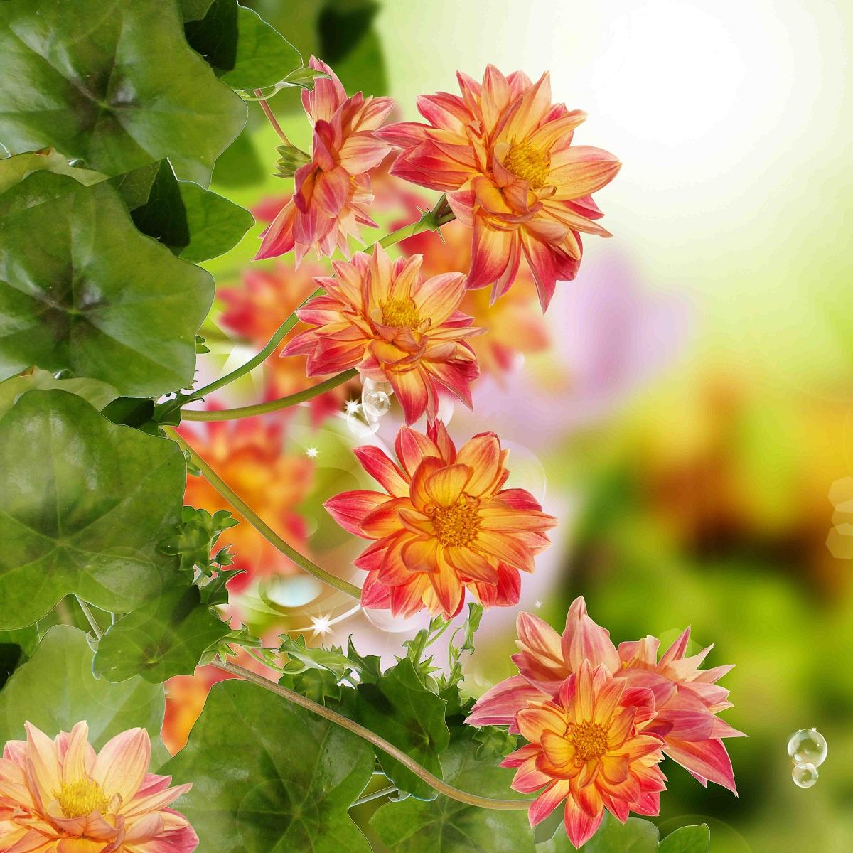 Цветы на натяжном потолке 99